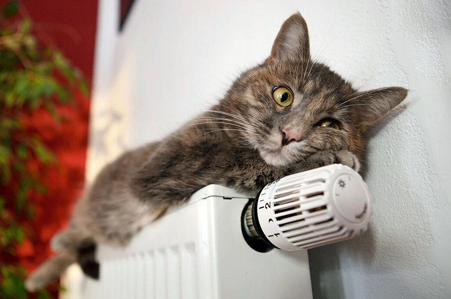 Жар жаром: в Петербурге включили отопление