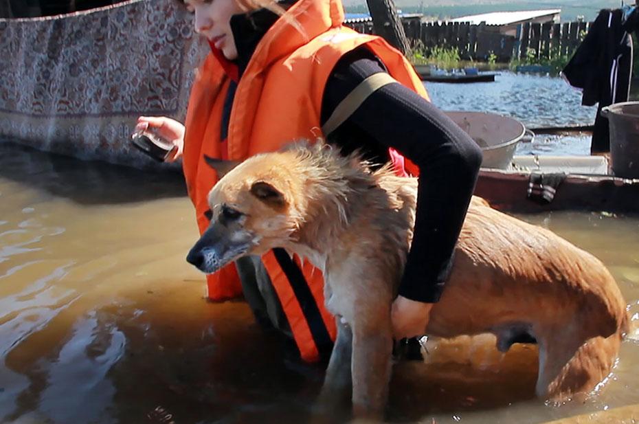 В Бурятии объявили ЧС из-за паводка. Уровень воды в районе Улан-Удэ вырос на 20 сантиметров за сутки